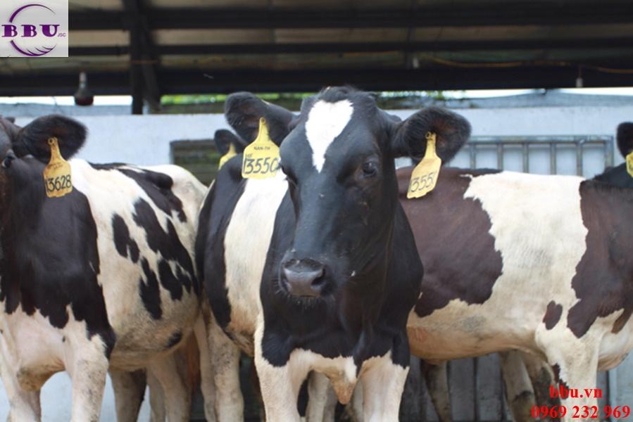 Viên sữa bò non 200 viên Homart nhập từ Úc
