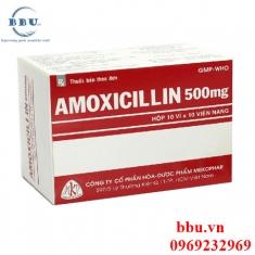 Thuốc kháng sinh điều trị hô hấp, đường mật, tiêu hóa, tiết niệu, sinh dục Amoxicillin 500mg