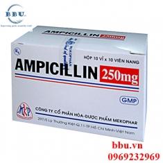 Thuốc khánh sinh điều trị viêm đường hô hấp, viêm xong,viêm phế quảng mãn tính Ampicillin 250mg